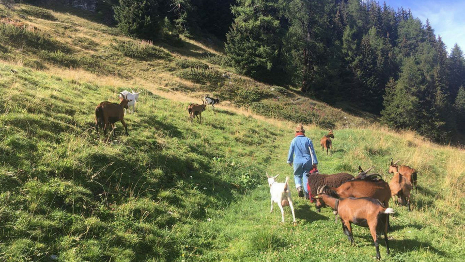 Herds and Curds presenter, Carmen, herding goats in the alps