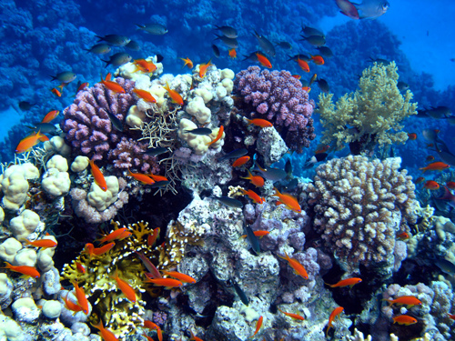 Coral growth was one of the measures used in a recently published study to track climate for the last 500 years
