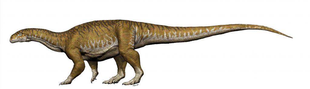 Newly discovered sauropod dinosaur Ingentia Prima (Image supplied by Jorge A. Gonzalez)