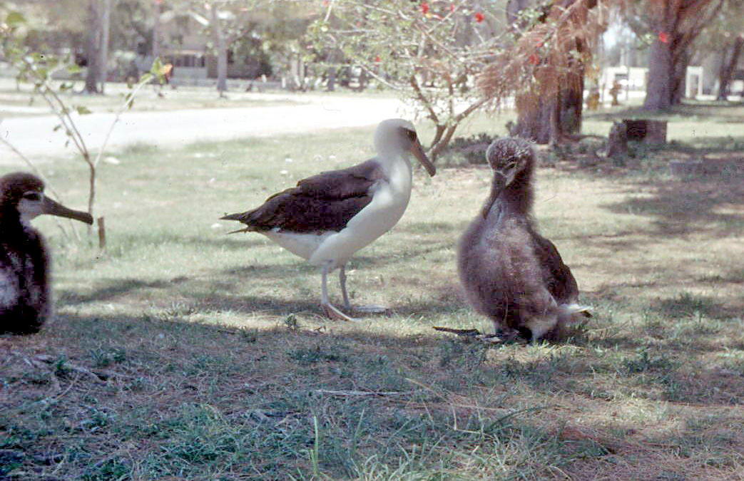 Albatross are among the biggest seabirds