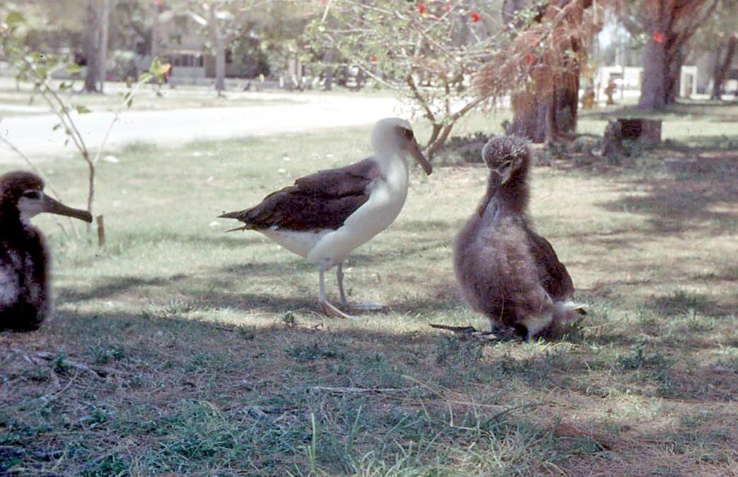 Albatross are among the biggest seabirds