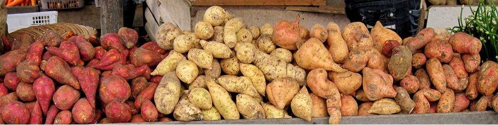 Sweet potato varities have long held expressed genes from otehr organisms