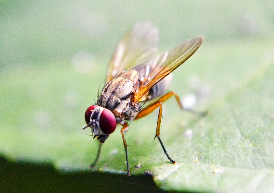 What turns on fruit flies?