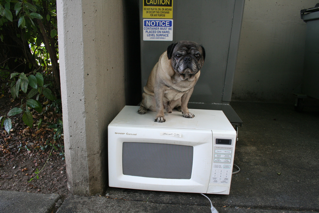 Pug vs microwave oven (Photo by Zoomar, via Flickr)