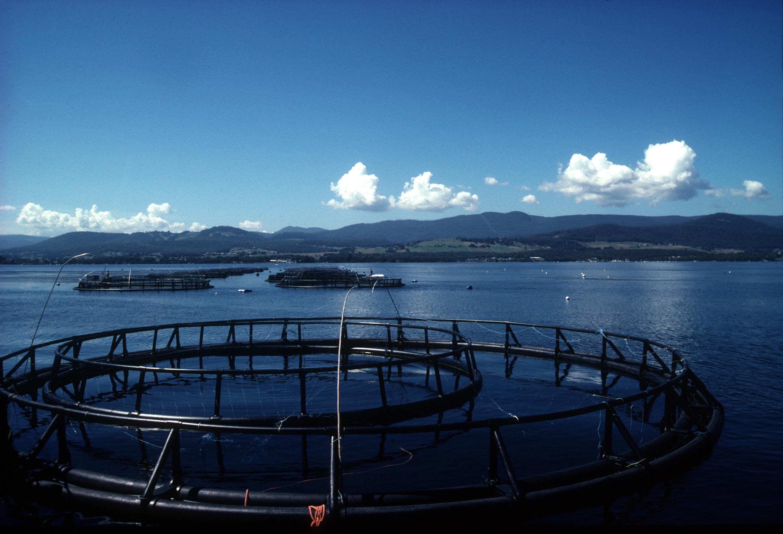 Salmon farm in Tasmania.