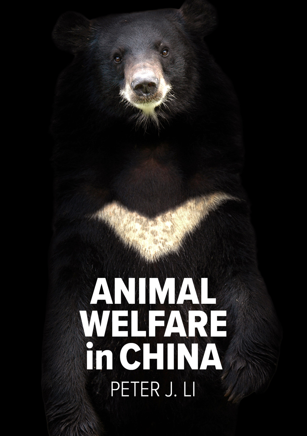 A moon bear staring out at you on a black background, text - Animal Welfare in China by Peter J. Li