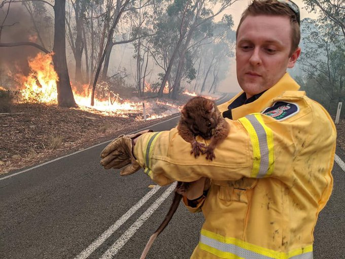 Dean the firefighter with a possum – photo from @Em___ on Twitter.