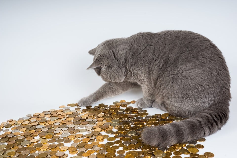 Cat playing with lots of gold coins