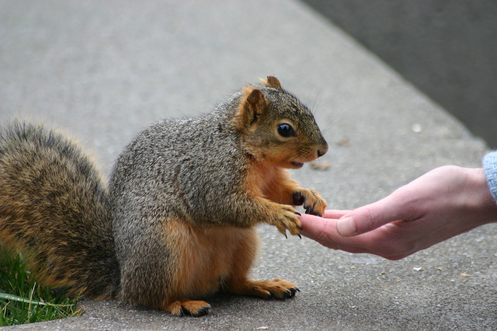 Squirrel reaches out to a human hand