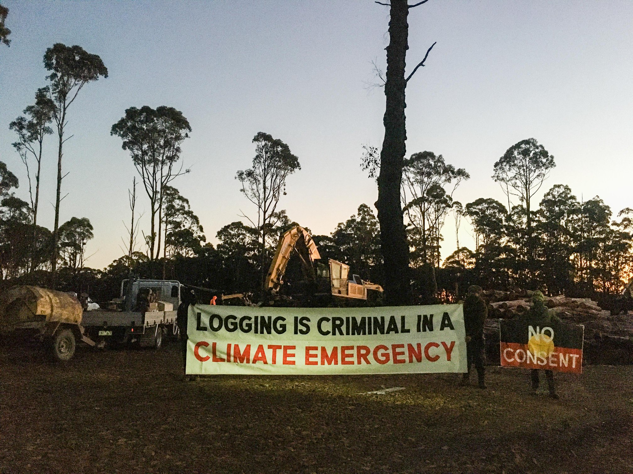 Logging is criminal in a climate emergency