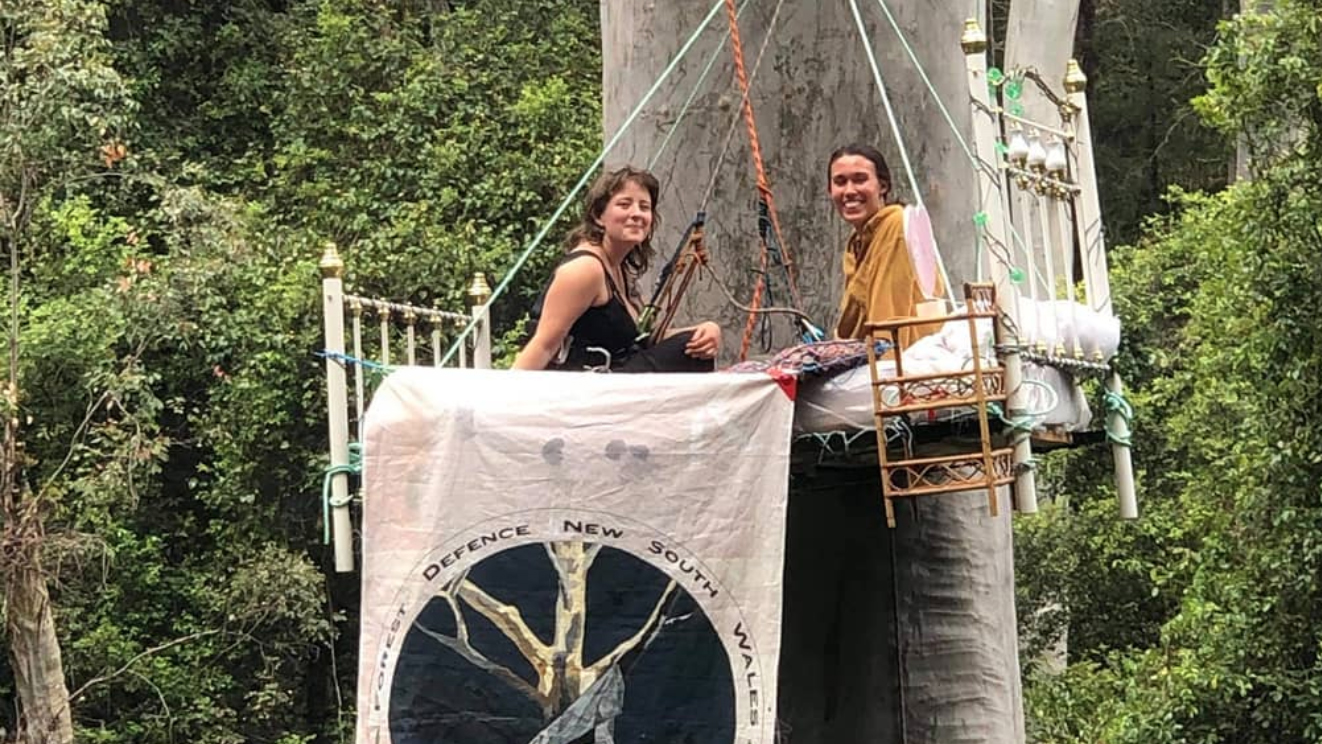 2 women sit in an iconic vintage style cast iron bed painted white with brass knobs on a luxurious mattress with a white sheet. The two women are young, fresh faced and smiling. The bed has been raised up with ropes high above the ground up a huge old blue gum too create an unusual and striking looking tree sit high in the forest canopy. A banner is draped of the bed that saya Forest Defence NSW and FDN, and also depicts a picture of a more classic looking tree-sit with the words Defend Native Forests