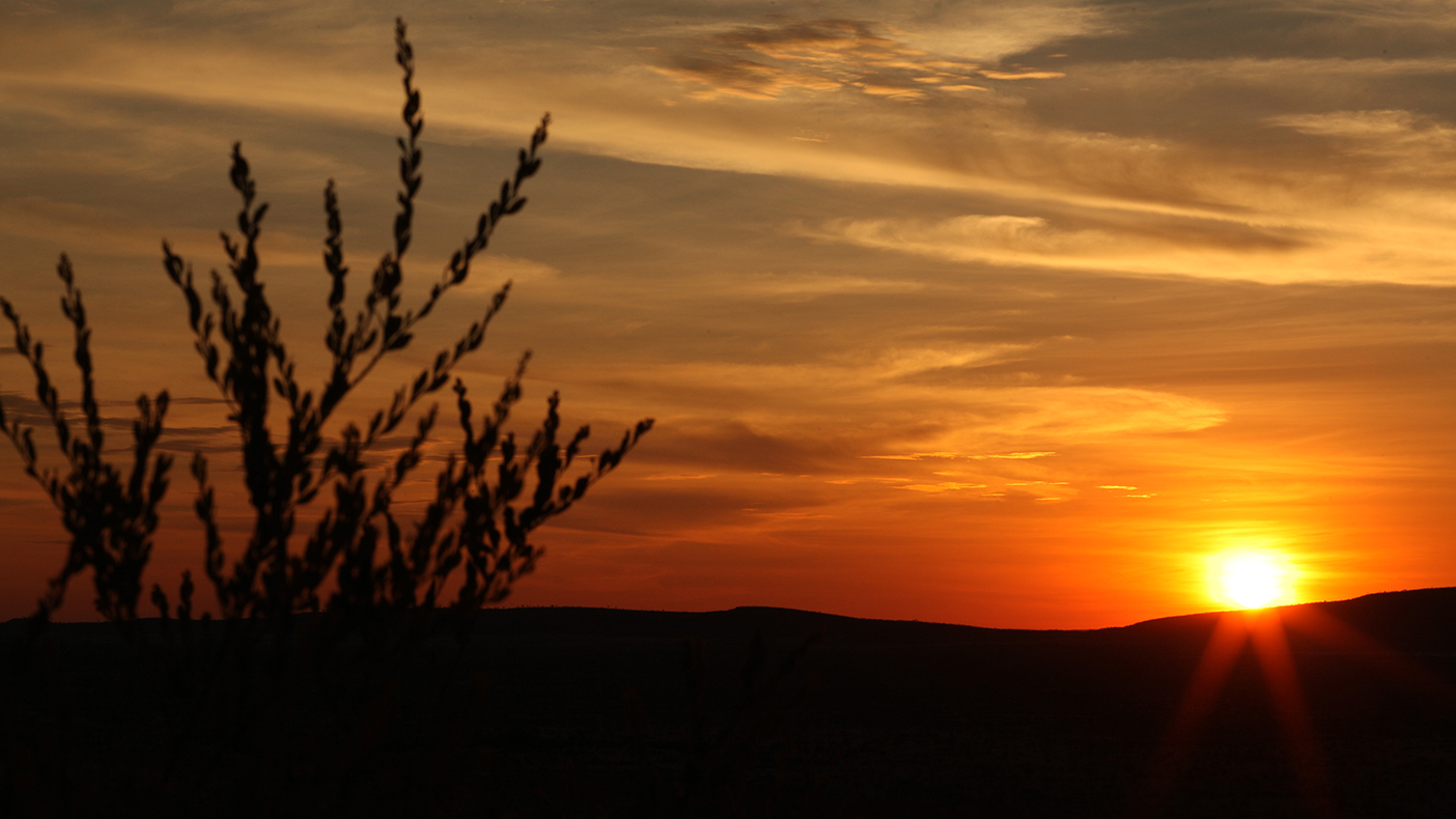 desert sunset with silhouette of grass plant in foreground