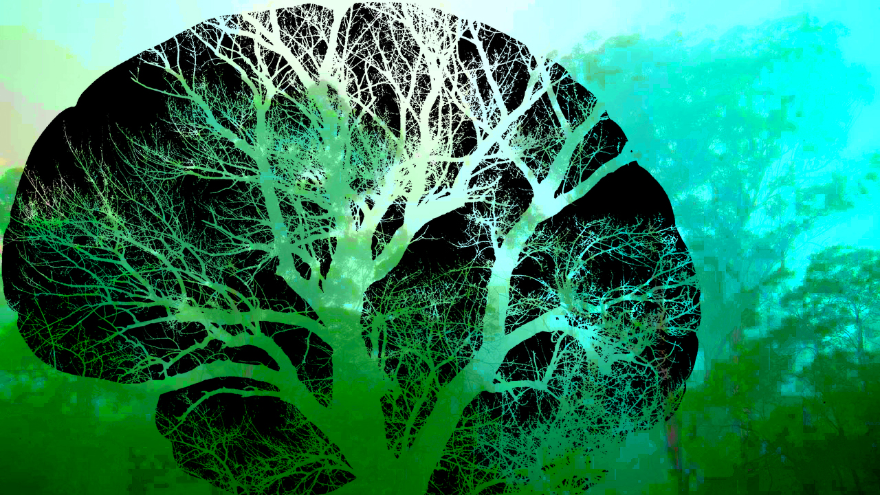 Abstract 'arty' image. A black stencil of a large brain is superimposed on a psychedelic forest scene in various shades of green. The gaps in the black stencil brain are the blood capillaries that look like the outline of a tree through which the greens of forest scene can be seen, and thus the two images are blended together to become one.