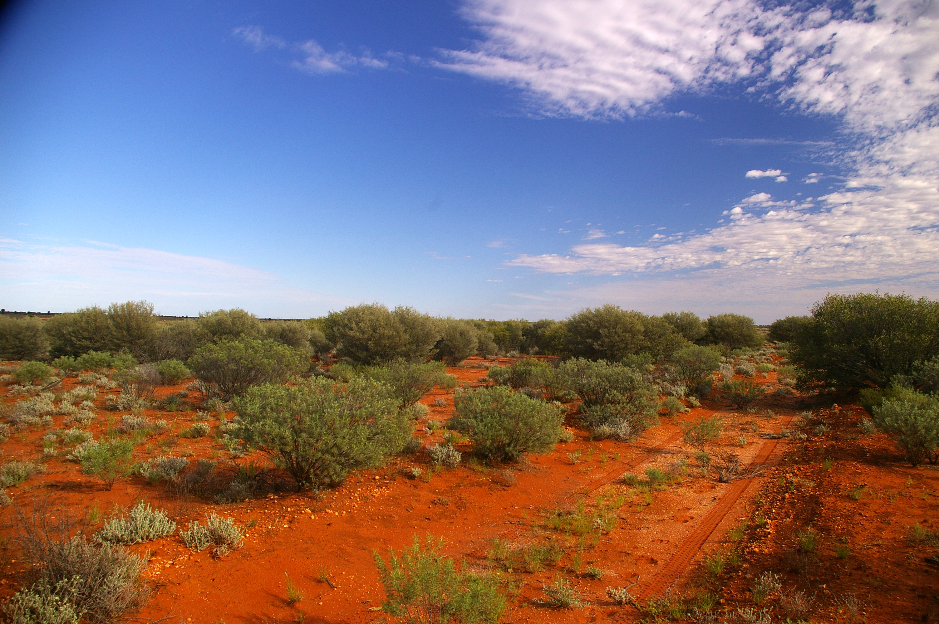 Photo of desert with red earth, plants and small trees. There is tyre marks in bottom right of photo, and blue sky in top half with a few clouds on the right.