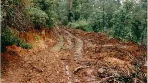 Low point on logging road
