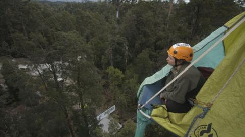 Tree-sit in the Tarkine, Tasmania