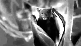 Black and white bat from Universal Poplab song Vampire in You