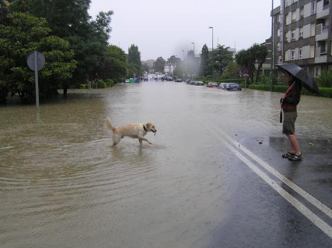 Dog next to flood waters