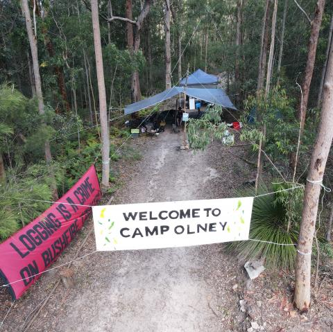 A forest camp with banners.