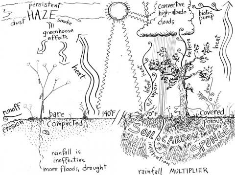 A diagram of a spongy soil full of microorganisms, fungi and water.