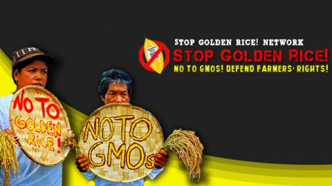 """This picture is a campaign promotional graphic headed with some text saying """"Stop Golden Rice! Network; Stop Golden Rice! No to GMOs! Defend Farmers Rights!"""" There is a logo depicting a single gold rice grain with a label on it saying """"Golden Rice"""" and a bar code, encircled with a prohibition sign. There are also 2 Indigenous farmers each holding a threshing basket and a clump of freshly harvested rice. One basket has text saying """"No to Golden Rice"""" and the other has text saying """"No to GMOs""""."""