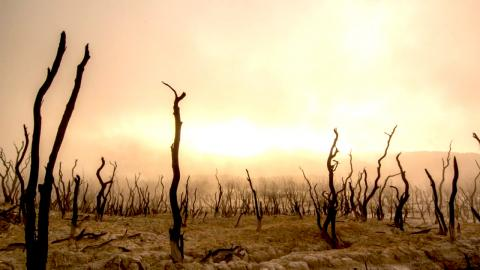 a photograph that has been artistically altered to depict a burned out and parched landscape with blackened tree stumps and a skyline that looks like it's on fire
