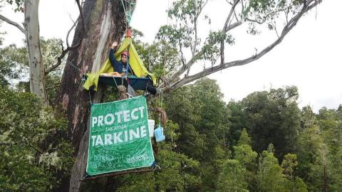 A woman perches high up in a giant eucalyptus tree on a tree-sit platform. She is wearing a helmet and sheltered by a tarp, and she is waving. Two water storage containers and a banner saying Protect Takayna/Tarkine dangle from the platform. The lush forest canopy is visible in the background.