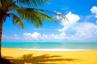 Beach and Palms - Summer Specials